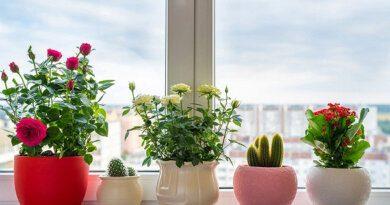Названы опасные комнатные растения&nbsp
