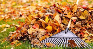 5способов использовать опавшую листву надаче&nbsp