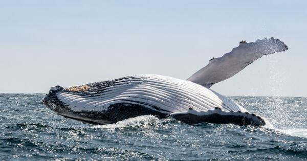 6 мест, где вы встретите живых китов