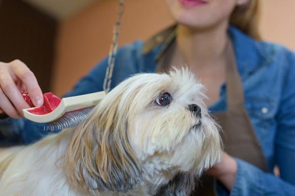 Хозяйка показала, делать сшерстью линяющей собаки&nbsp