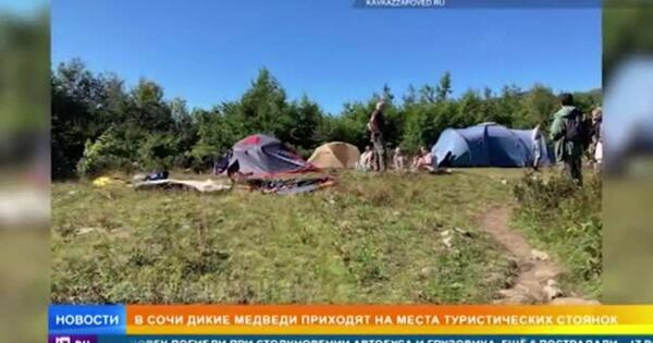 Медведи разорвали в клочья палатки туристов в Сочи