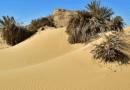 Анапу снова занесло песком 4