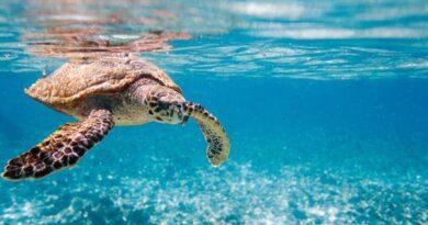 В турецкой Анталье черепаха напала на туристку