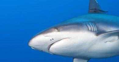 Турист попытался провезти вбагаже мертвую акулу