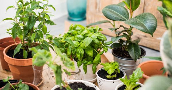Россиян предупредили обопасных для здоровья комнатных растениях