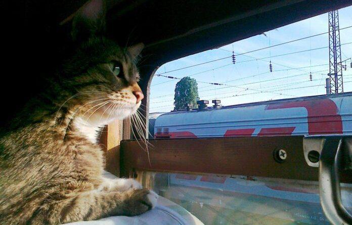 До конца года совершать поездки в плацкартных вагонах можно со скидкой 40%