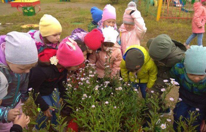 Дошкольники Усинска помогают растить цветы и клубнику