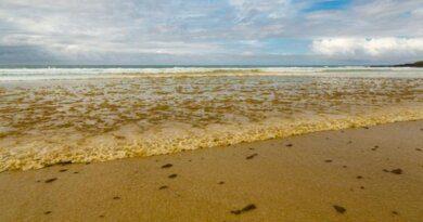 Гибель туристов объяснили воздействием ядовитых водорослей