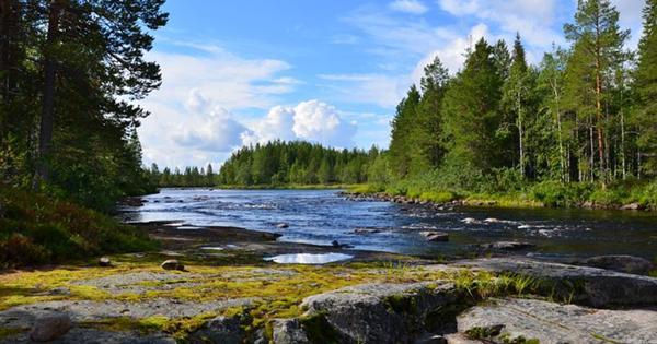 «Черно на душе»: туристку ужаснули полумертвые озера и леса Карелии