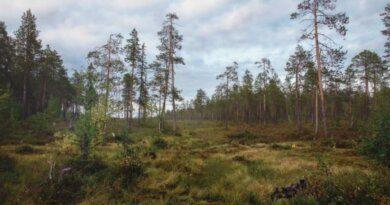 Гостей и жителей Усинска просят не выезжать на отдых в лес