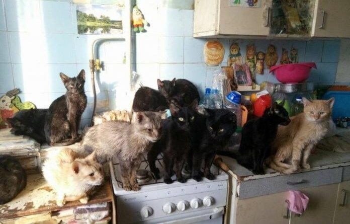 Граждан начнут штрафовать за лишних кошек в квартире