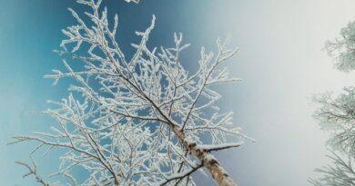 МЧС предупреждает о новой волне морозов из Арктики