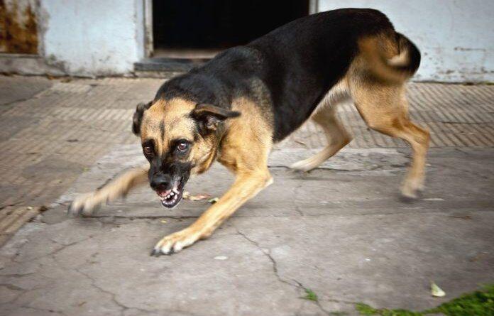 Мэр Ухты считает, что бесхозные собаки должны быть усыплены