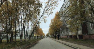 Муниципальный центр управления Усинска помог решить вопрос с опасными деревьями