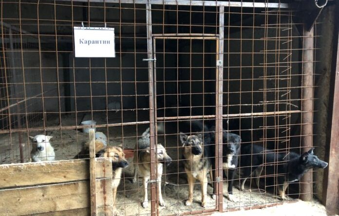 На отлов собак администрация Усинска готова выделить 7,4 млн рублей