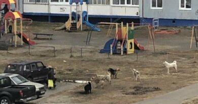 Не много ли собак для детских площадок Усинска?
