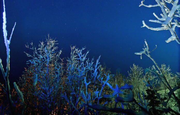 Ночь в Усинске вновь обещает быть морозной