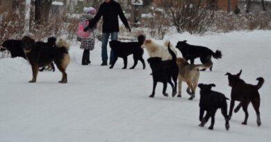 Новости соседей: в Печорском районе ввели особый режим из-за собак