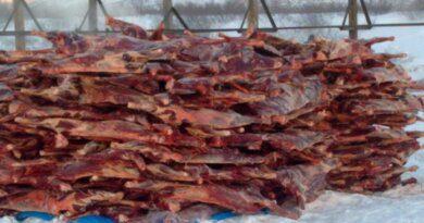 Оленеводы Коми в 2020 году на треть сократили объем поставок мяса