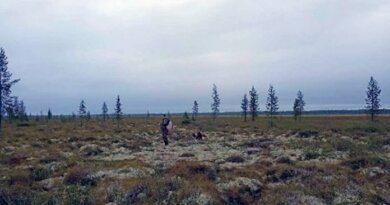 Полиция Усинска рассказала, как собака Агра помогла найти пропавшего грибника