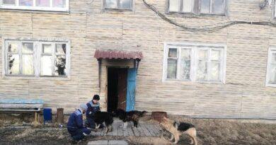 """После визита """"Белого света"""" в Усть-Усу бродячих собак не видно"""