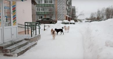 Проблему безнадзорных собак в Коми попробуют решить с помощью Федерального собрания и Правительства РФ