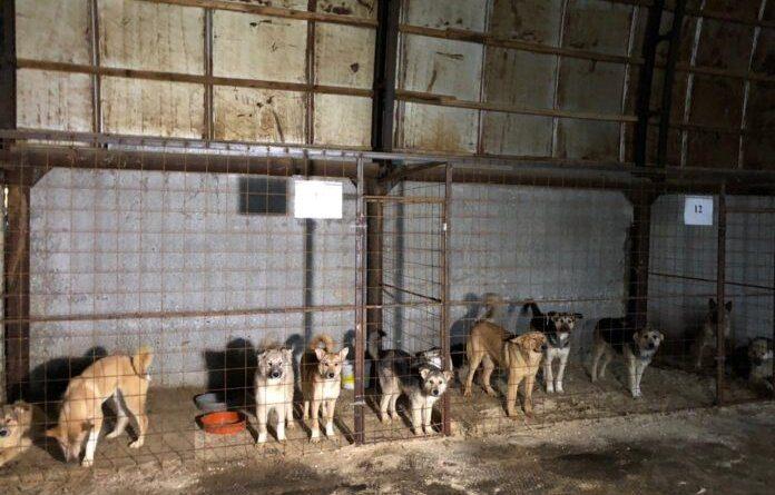 Разработаны правила строительства приютов для бездомных животных