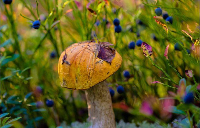 С такой погодой в Усинске грибов хватит на три года вперёд