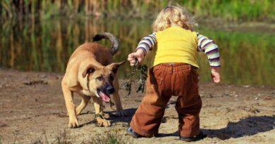 Собаки продолжают кусать жителей Усинска не смотря на коронавирус