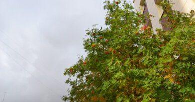 Усинск накроет гроза и шквалистый ветер