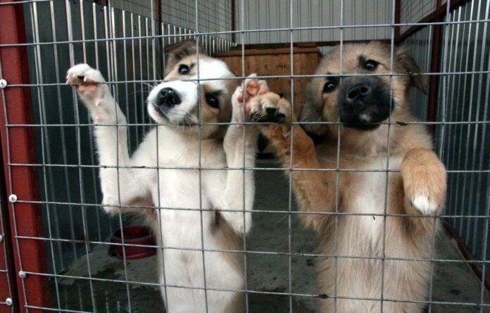 Усинск вошел в число муниципалитетов с самыми кусающимися собаками в Коми