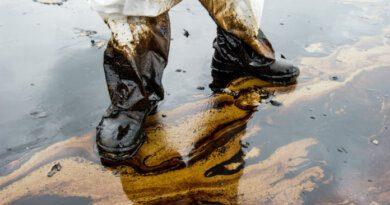 В Арктике обнаружили бактерий, которые разлагают нефть и солярку