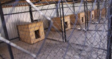 В Коми активисты хотят открыть региональный приют для животных
