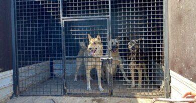 В Усинске планируют увеличить местный питомник для бездомных собак